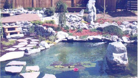 Comment définir le coût d'une piscine naturelle?